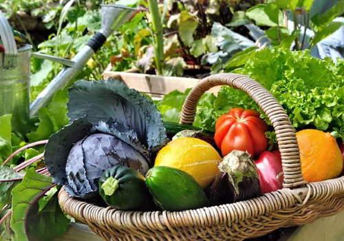 Лунный календарь огородника и садовода на август 2019 года