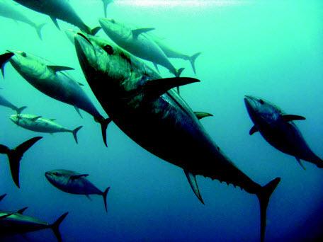 Рыба с ртутью