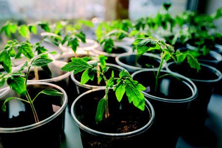 Как вырастить овощи на подоконнике. Секреты и тонкости