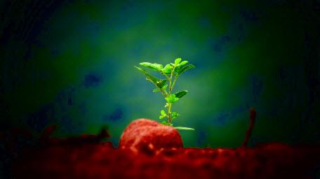 Как растения определяют время