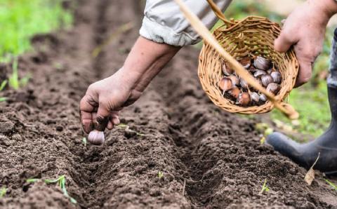 Посевной календарь сентября, советы садоводам и огородникам