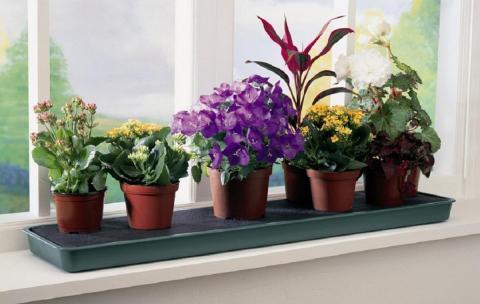 Комнатные цветы для защиты дома от зависти, злобы и невезения