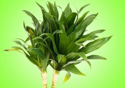 Какие домашние растения спасают нас лучше всех
