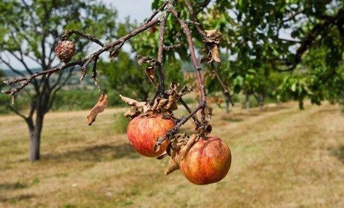 Деревья и кустарники осенью: на что нужно смотреть и что замечать