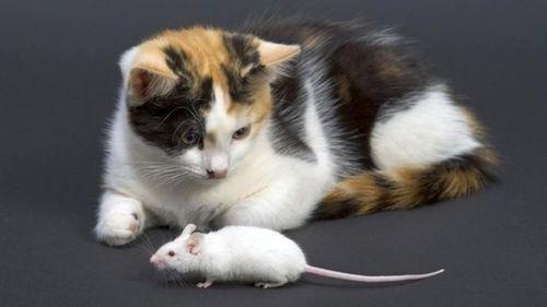 Кошки более привязаны к человеку, чем предполагалось