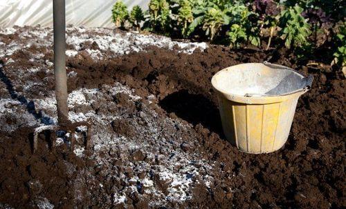 Известь в жизни почв и растений