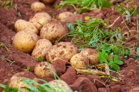 Готовим грядки под картофель: самые важные дела осенью
