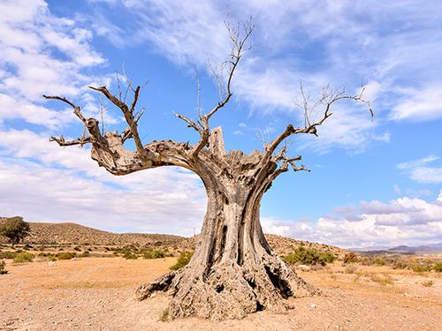"""Притча """"Засохшее дерево"""""""