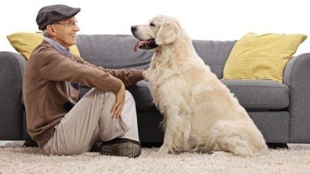 Собаки способны продлить жизнь своим владельцам