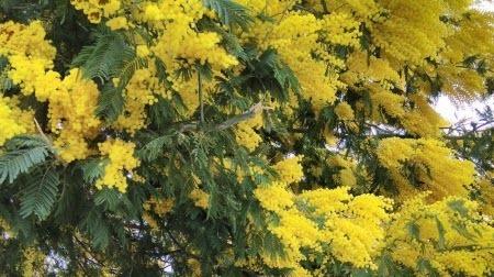 Желтому цвету рады на севере и равнодушны на юге