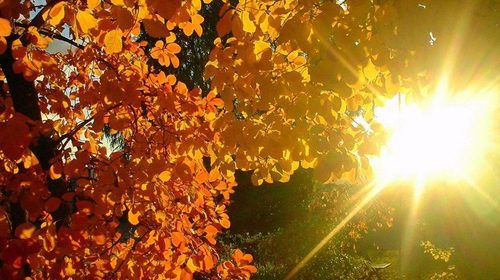 Прогноз погоди в Україні на 16 жовтня