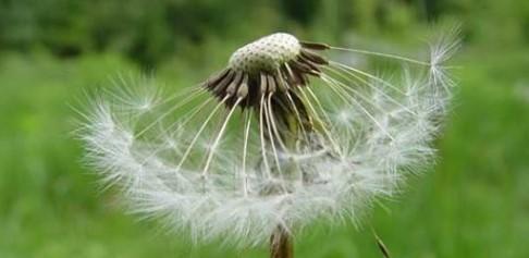 Дача: о вреде сорняков