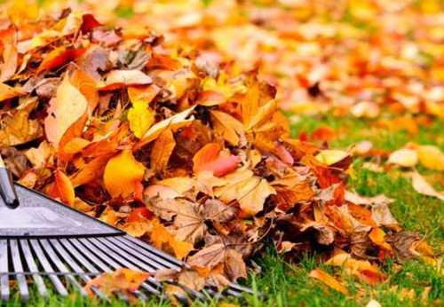 Листовая земля из опавших листьев
