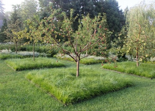 Нужно ли перекапывать приствольные круги плодовых деревьев