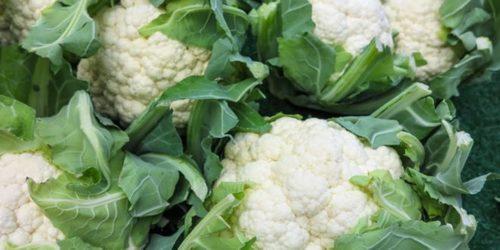 Выращиваем цветную капусту: посадка, уход, подкормки
