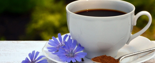 Цикорий - идеальная замена кофе