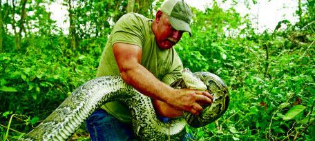Флориде требуются охотники за питонами
