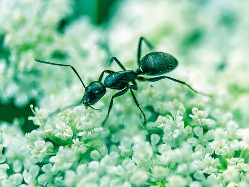 """Притча """"О муравье"""""""