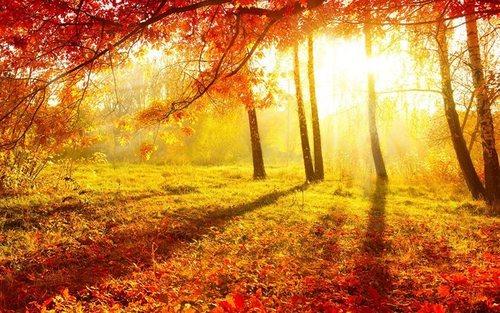 Прогноз погоди в Україні на 13 листопада