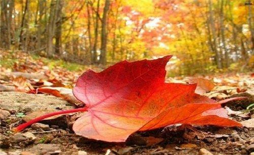 Прогноз погоди в Україні на 14 листопада