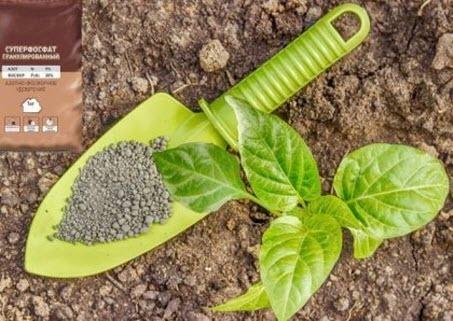 Фосфор и фосфорные удобрения