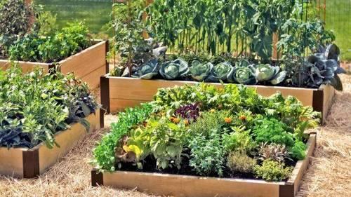 Как сделать овощи вкусными и красивыми