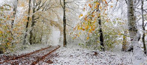 Прогноз погоди в Україні на 23 листопада