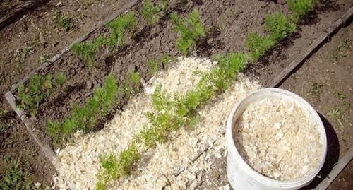 Древесные опилки на участке – польза или вред