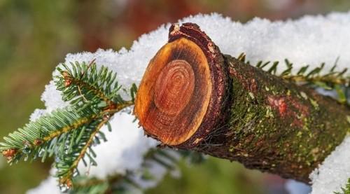 Прогноз погоди в Україні на 11 грудня