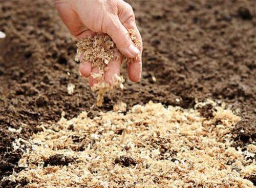 Как правильно вносить опилки в почву