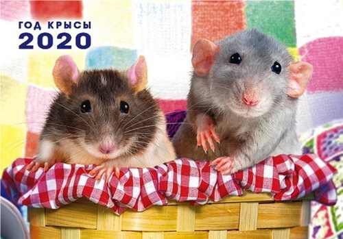 В год Крысы их ждут настоящие чудеса