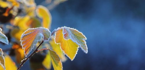 Прогноз погоди в Україні на 20 січня