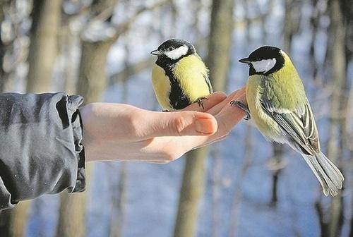 Прогноз погоди в Україні на 26 січня