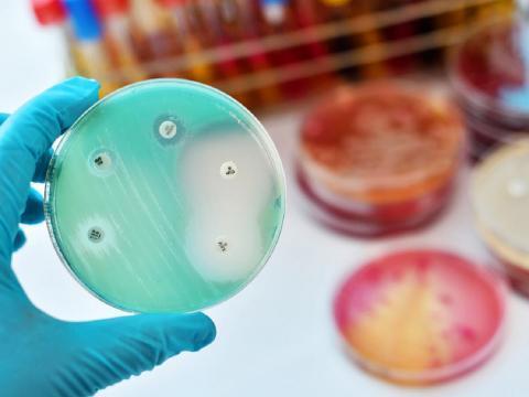 Найден антибиотик: эффективный против устойчивых бактерий