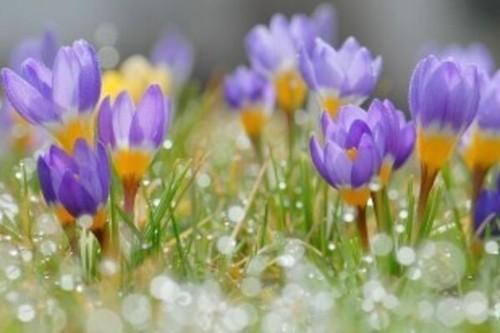 Прогноз погоди в Україні на 02 квітня