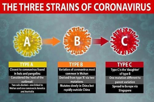 В мире распространяется три разных штамма коронавируса