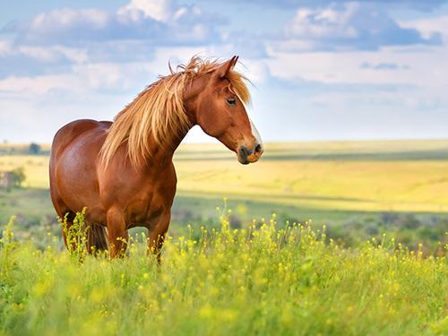 """Притча """"Сознание и осёдланная лошадь"""""""
