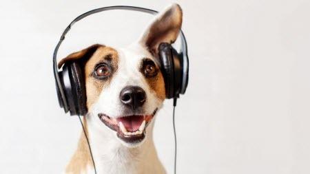 Животные с удовольствием слушают музыку