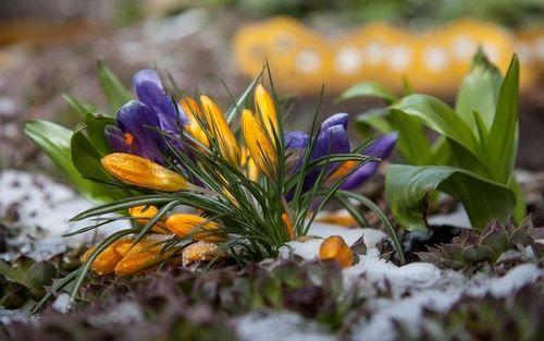 Прогноз погоди в Україні на 23 травня