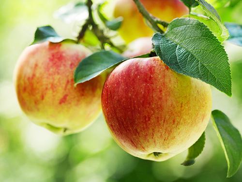 """Притча """"Самое красивое яблоко"""""""