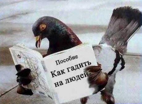 Птица говорун, нифига не отличается умом и сообразительностью...