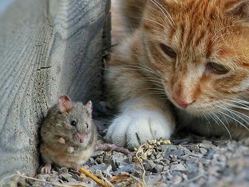"""Притча """"Благородная мышка"""""""