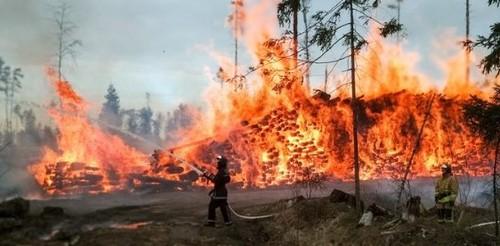 Пожары в Сибири бьют рекорды 2019 года: Площадь сгоревшего леса сравнялась с территорией Австрии