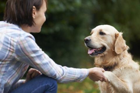 Формулу сравнения возраста собак и человека разработали ученые