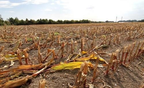Метеорологи фиксируют сильнейшую засуху