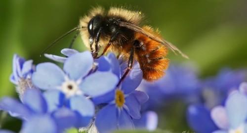 Куда пропали все пчелы?