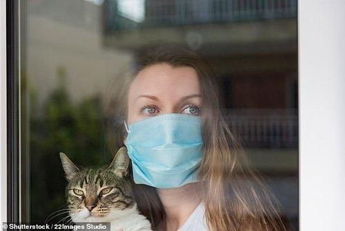 Кошки и собаки могут заражаться Covid-19 от своих хозяев