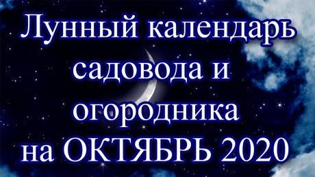 Лунный календарь огородника и садовода на октябрь 2020 года