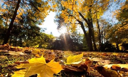 Прогноз погоди в Україні на 7 жовтня