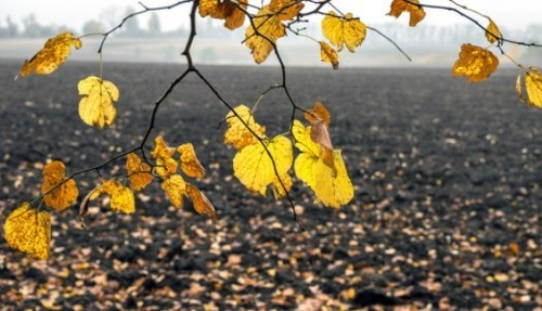 Прогноз погоди в Україні на 2 листопада